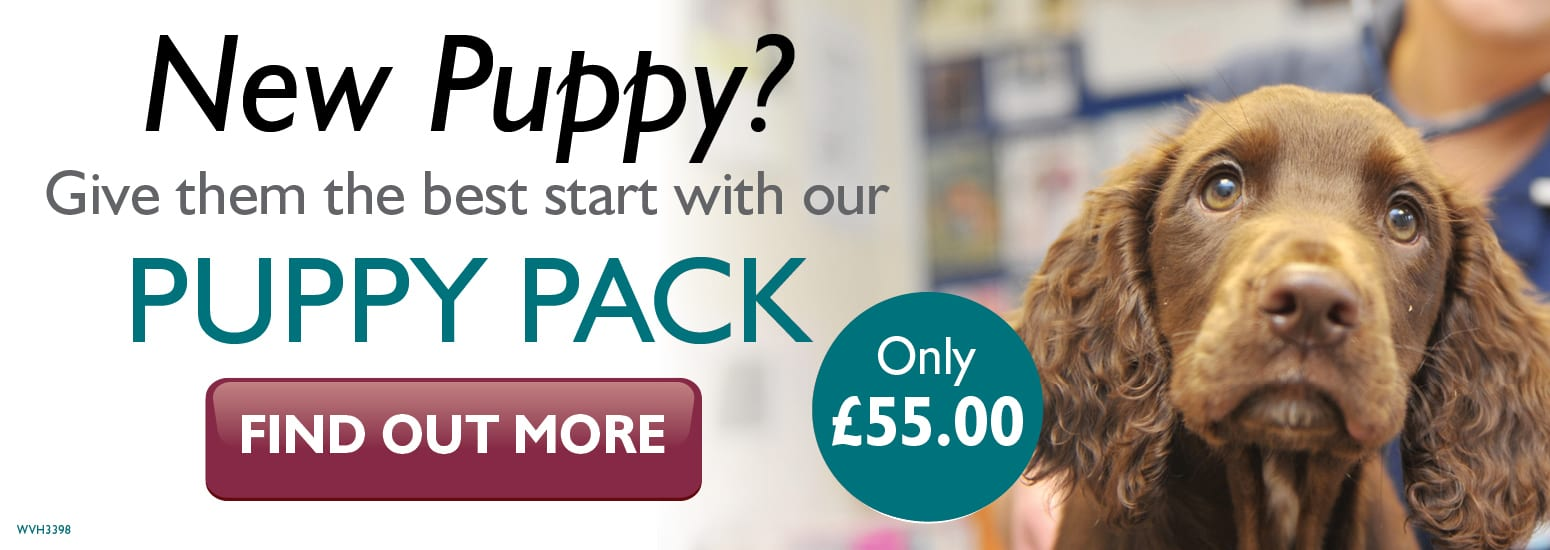 Puppy Pack covering puppy injections, flea & worm treatment, and much more for only £55 at vets in Kelsall
