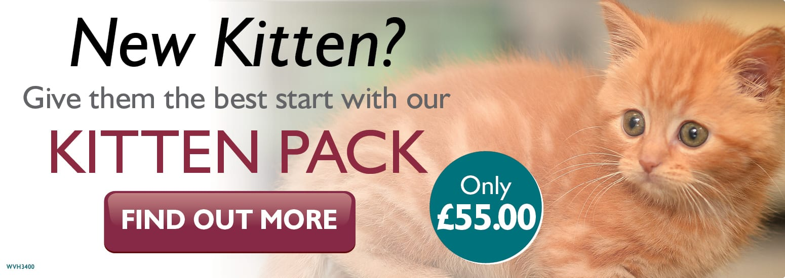 Kitten Pack covering kitten injections, flea & worm treatment, and much more for only £55 at vets in Kelsall